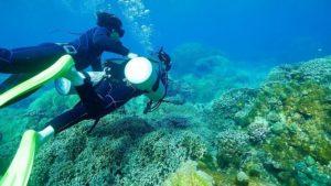 ダイビングに参加しサンゴ礁を間近で観察