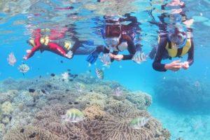 カラフルサンゴ周辺で熱帯魚に餌やりをする