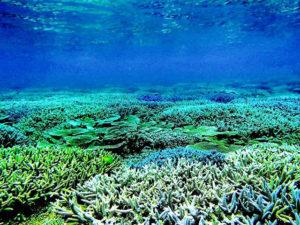 宮古島の海中の珊瑚礁