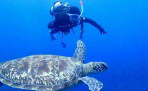 ウミガメと出会える石垣島体験ダイビング