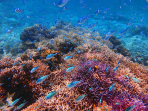 透明度抜群のパナリ島の海