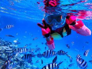 たくさんの熱帯魚に会えるパナリ島の海