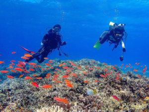 ダイビングで熱帯魚と一緒に泳ぐ人