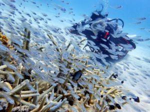 熱帯魚の群れを見ながら楽しむ体験ダイビング
