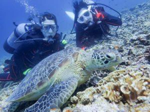 西表島の体験ダイビングでウミガメを観察