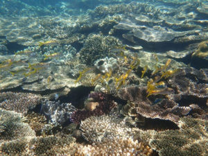 海底を埋め尽くすカラフルサンゴ