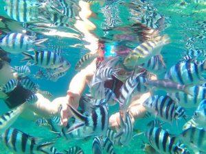 沢山の熱帯魚に囲まれた女性