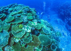 透明度抜群の石垣島の海