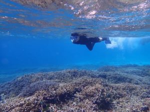 カラフルサンゴに覆われたバラス島周辺の海