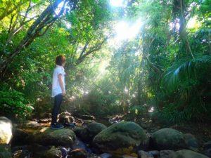 西表島のカヤック(カヌー)ツアーでマングローブの中を森林浴