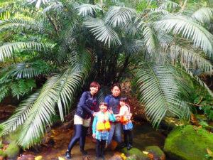 西表島の巨大なニッパヤシ