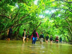 手つかずの西表島の亜熱帯ジャングルを探検