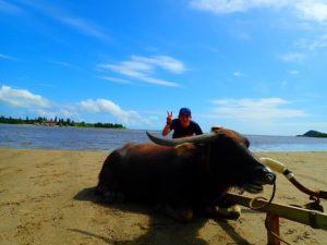 休憩する水牛車と観光客