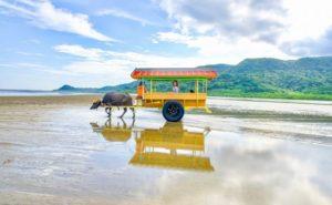 西表島から由布島へ水牛車で渡る