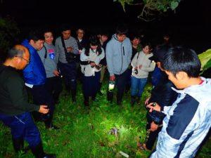 西表島の夜のジャングルでヤシガニを発見