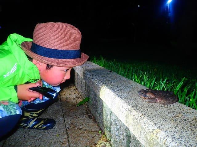 ナイトツアーでカエルを観察