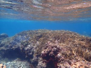 カラフルサンゴで埋め尽くされた宮古島の海