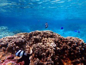 熱帯魚やサンゴ礁がたくさん生息する小浜島の海