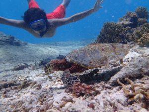 石垣島の人気ウミガメスポットでシュノーケル