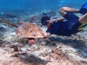 ウミガメと一緒に泳げるウミガメシュノーケルに参加中の女性