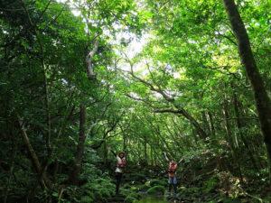 西表島の手つかずの原生林