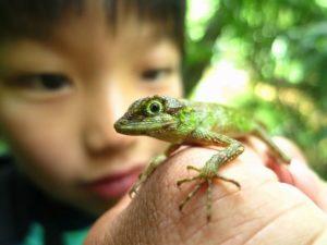西表島で亜熱帯動物と触れ合う子供