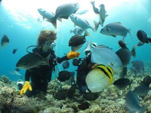 沖縄で初めて行う体験ダイビング