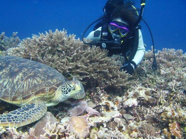 西表島のダイビングでウミガメを観察