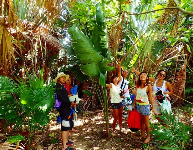 青の洞窟へ向かう際のジャングル道