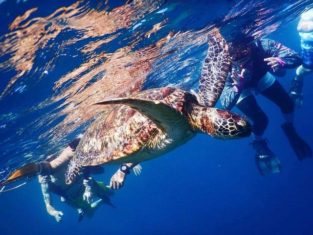 ウミガメと一緒に泳ぐツアー
