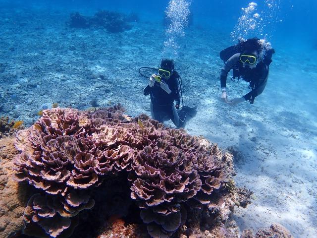 パナリ島で体験ダイビング