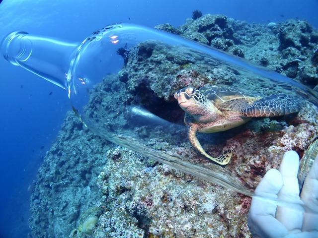 石垣島のシュノーケルツアーで見られるウミガメ体験