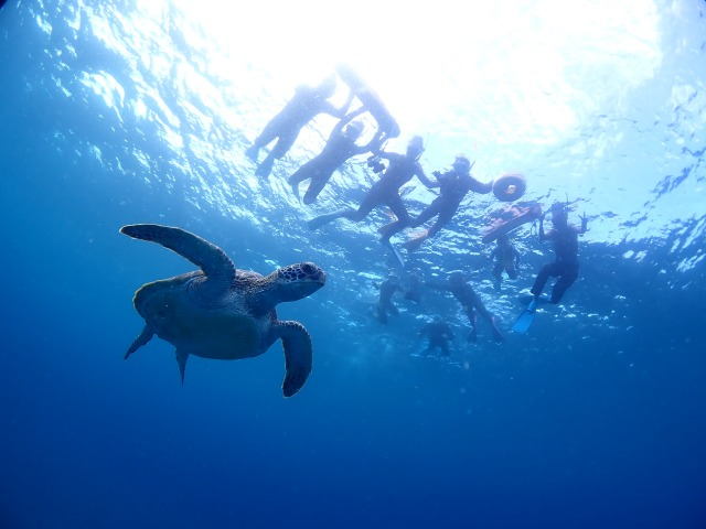 ウミガメをシュノーケリングで見る