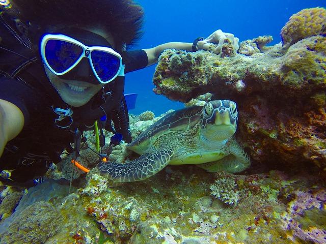 宮古島の貸切体験ダイビングで亀と出会う