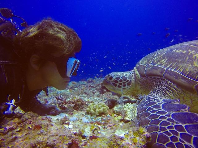 体験ダイビングでウミガメを観察