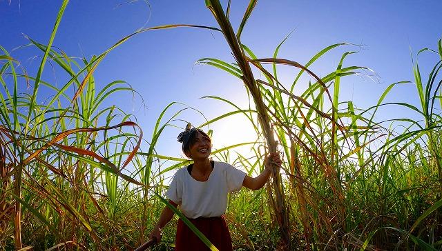 宮古島のサトウキビ畑の中にいる女性