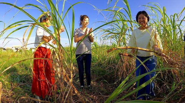 サトウキビを収穫する人