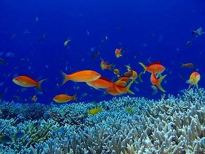 宮古島の海に生息するカラフルな珊瑚礁