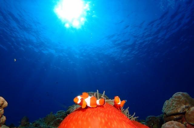 海中に差し込む太陽光とカクレクマノミ