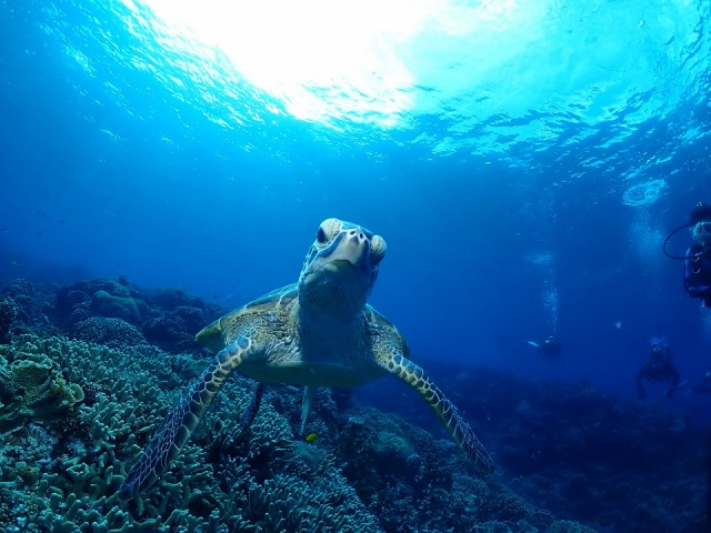 希少なウミガメも生息する慶良間諸島