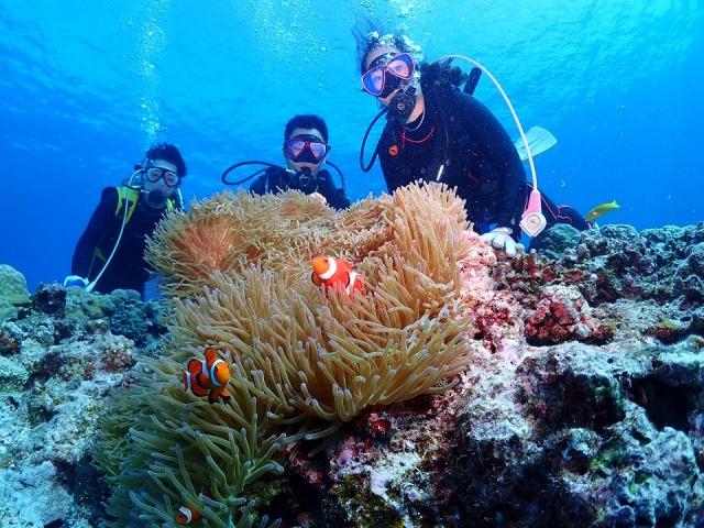 慶良間諸島の美しい海にはサンゴ礁、そこを住処とする熱帯魚がたくさん