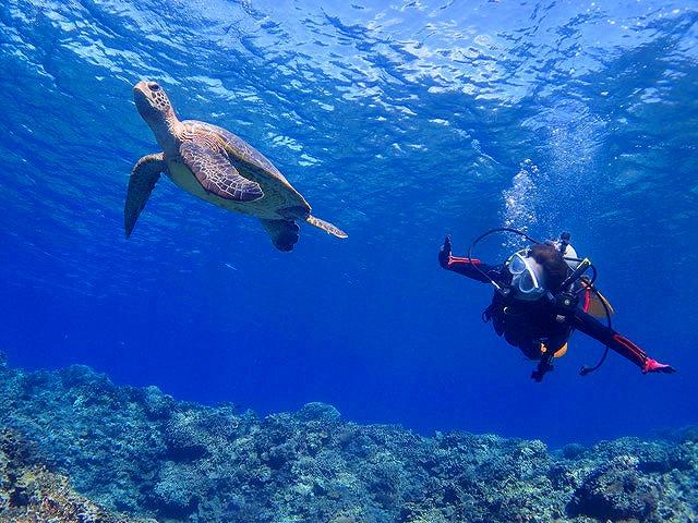 視界50mをも超す沖縄の海