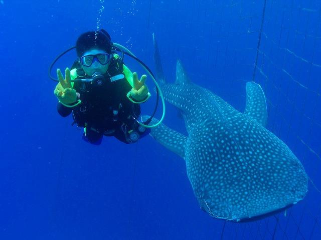体験ダイビングのジンベエザメ