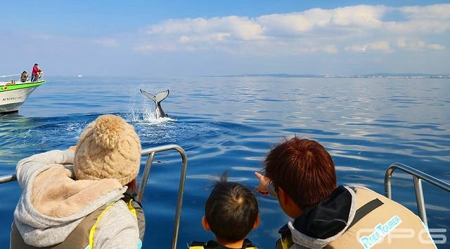 家族で船の上からクジラを鑑賞