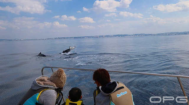 ボートのすぐそばにはクジラが