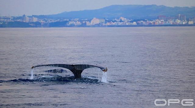 海面から飛び出る大迫力の鯨の尾びれ