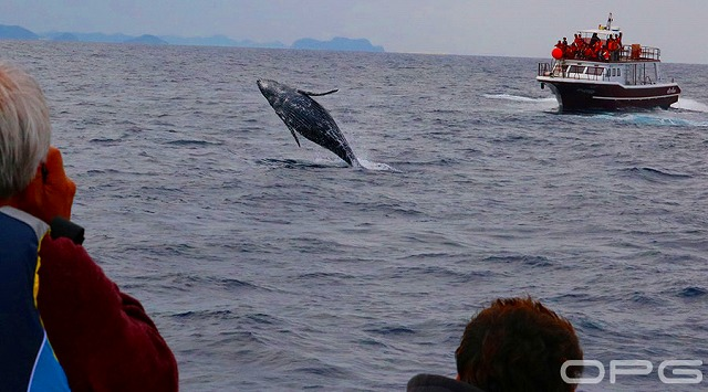 沖縄の海で楽しむホエールウォッチング
