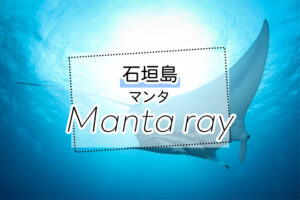 石垣島のマンタツアー