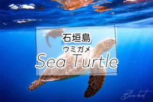 石垣島のウミガメツアー