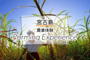 宮古島の農業体験ツアー